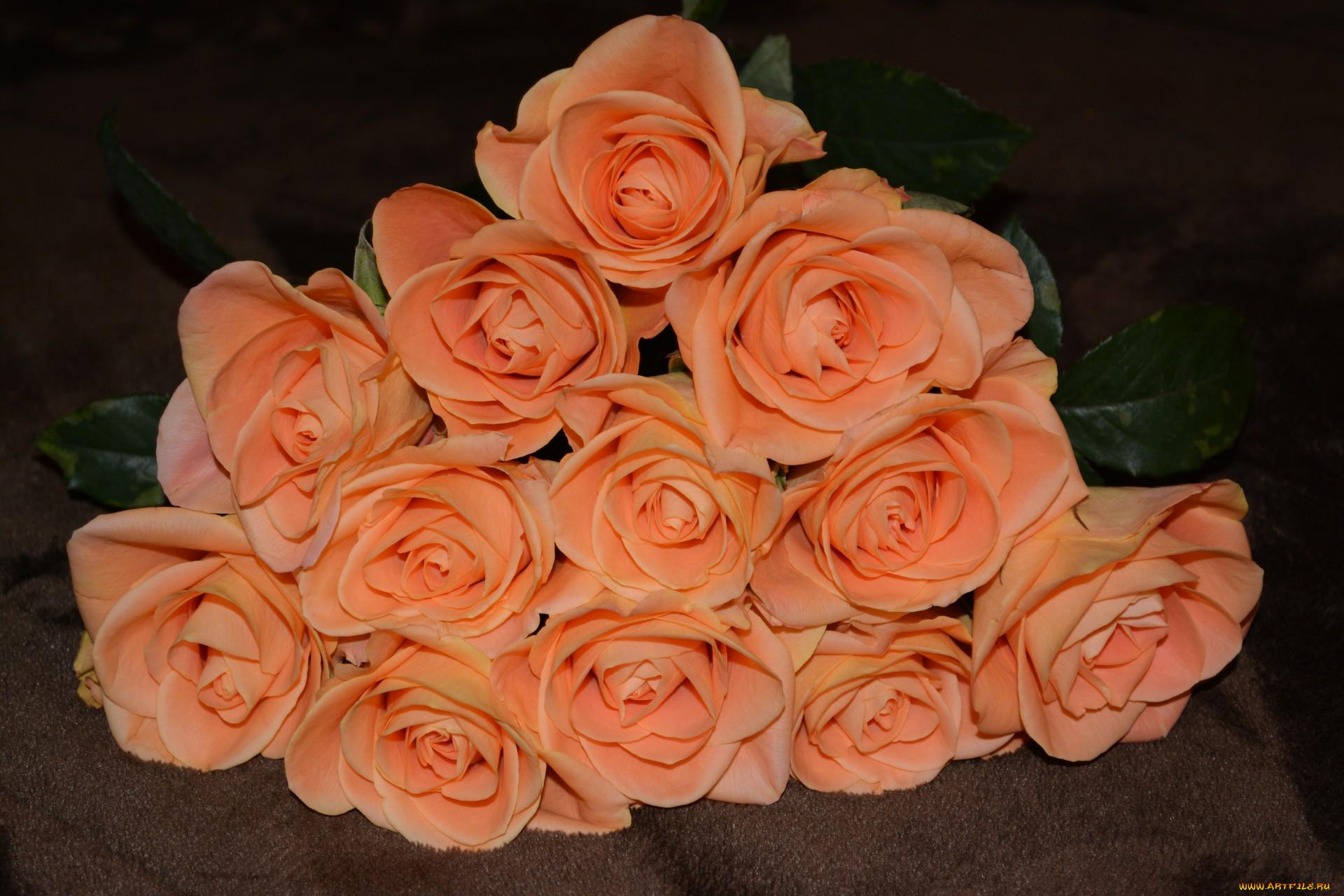 розы персиковый цвет фото один неприятный момент